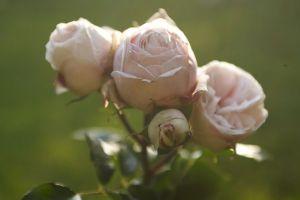 Rosen09.jpg