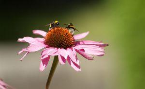 c57-Blumen-Juli09-2132.jpg