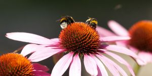 c67-Blumen-Juli09-2128.jpg
