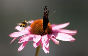 c73-Blumen-Juli09-2085.jpg