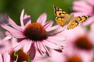 c88-Blumen-Juli09-2124.jpg