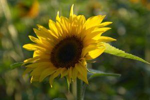 c9-Blumen-Juli09-1698.jpg