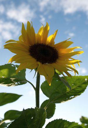 c90-Blumen-Juli09-1738.jpg