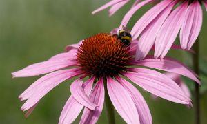 c95-Blumen-Juli09-2049.jpg