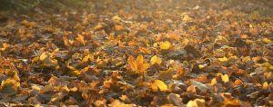 Herbst05.jpg