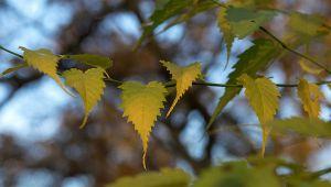 Herbst06.jpg