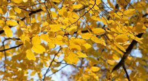 Herbst07.jpg