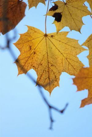 Herbst08.jpg
