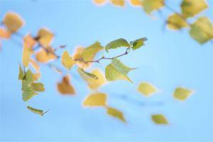 Herbst09.jpg