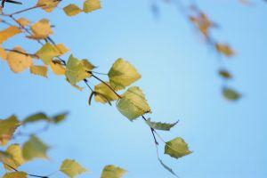 Herbst10.jpg