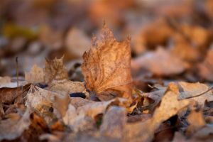 Herbst12.jpg