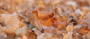 Herbst13.jpg