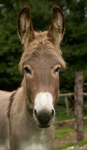 Kamele&Lamas-068.jpg
