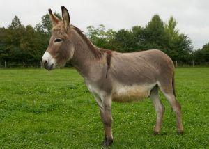 Kamele&Lamas-077.jpg
