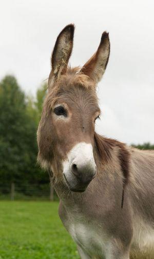 Kamele&Lamas-081.jpg