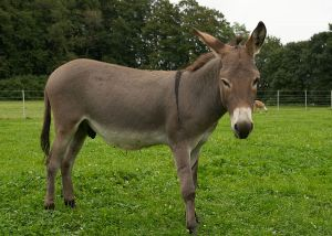 Kamele&Lamas-089.jpg