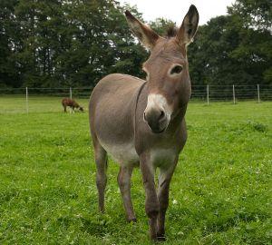 Kamele&Lamas-106.jpg