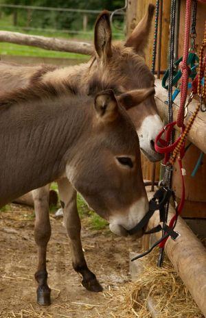 Kamele&Lamas-389.jpg