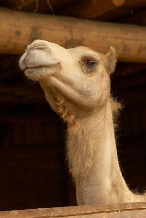 Kamele&Lamas-002.jpg