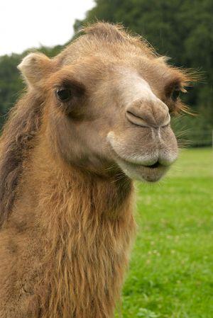 Kamele&Lamas-141.jpg