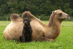 Kamele&Lamas-146.jpg