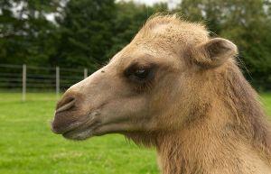 Kamele&Lamas-160.jpg
