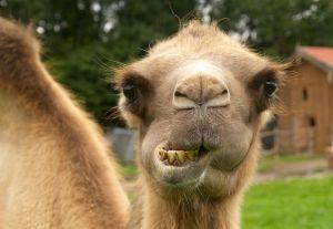 Kamele&Lamas-162.jpg
