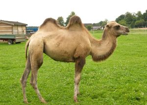 Kamele&Lamas-165.jpg