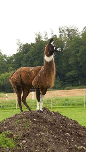 Kamele&Lamas-033.jpg