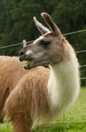 Kamele&Lamas-062.jpg