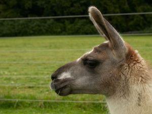 Kamele&Lamas-067.jpg