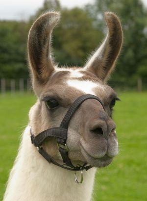 Kamele&Lamas-215.jpg