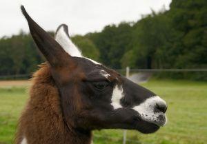Kamele&Lamas-235.jpg