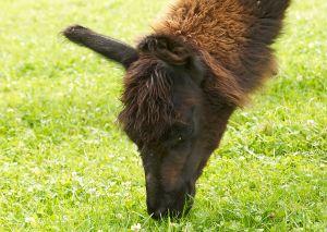 Kamele&Lamas-277.jpg