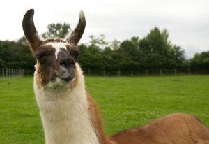 Kamele&Lamas-302.jpg