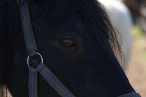 Pferde-Mai09-003.jpg