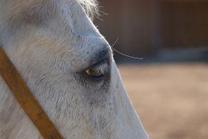 Pferde-Mai09-044.jpg