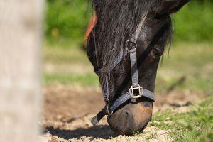 Pferde-Mai09-066.jpg