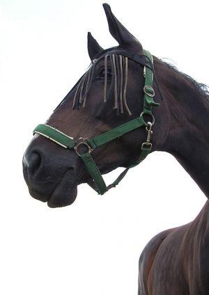 Pferde-Portraits---01.jpg