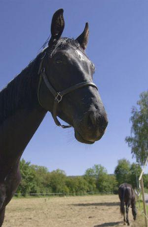Pferde-Portraits---08.jpg