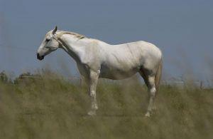 Pferde-Portraits---10.jpg