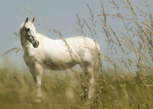 Pferde-Portraits---11.jpg