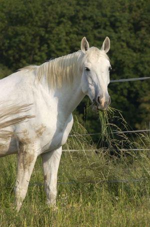Pferde-Portraits---13.jpg