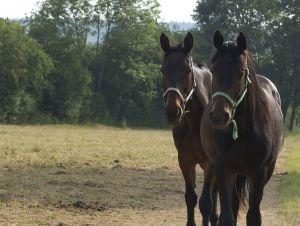 Pferde-Portraits---15.jpg