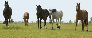 Pferde-Portraits---18.jpg