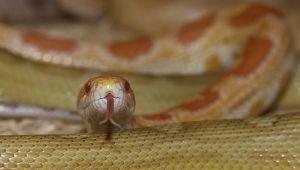 Schlangen-030.jpg