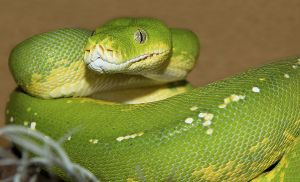 Schlangen-066.jpg