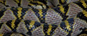 Schlangen-149.jpg