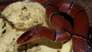 Schlangen-186.jpg