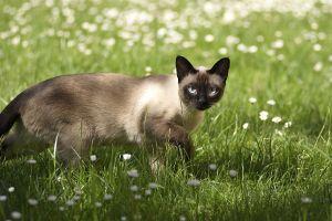 Katzen-Mai09-002.jpg